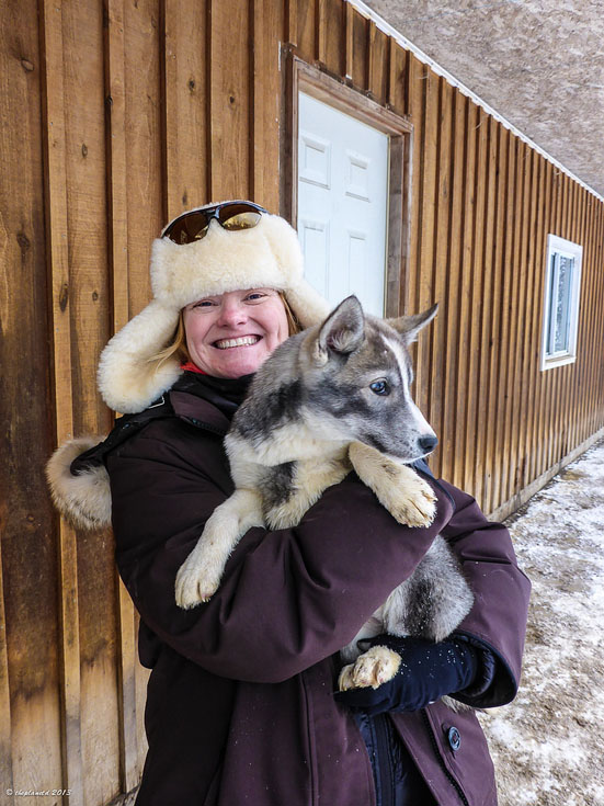 dogsledding ontario puppy