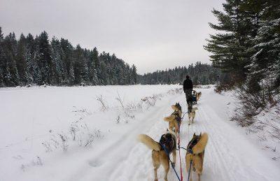 dogsledding ontario trail