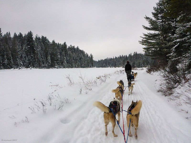 dogsledding ontario trail