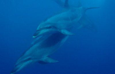 dolphin encounter new zealand bottlenose