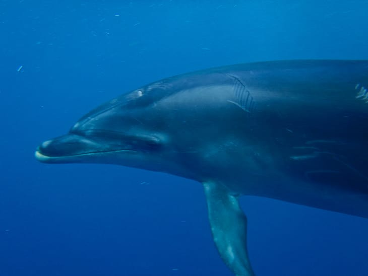 dolphin encounter new zealand face