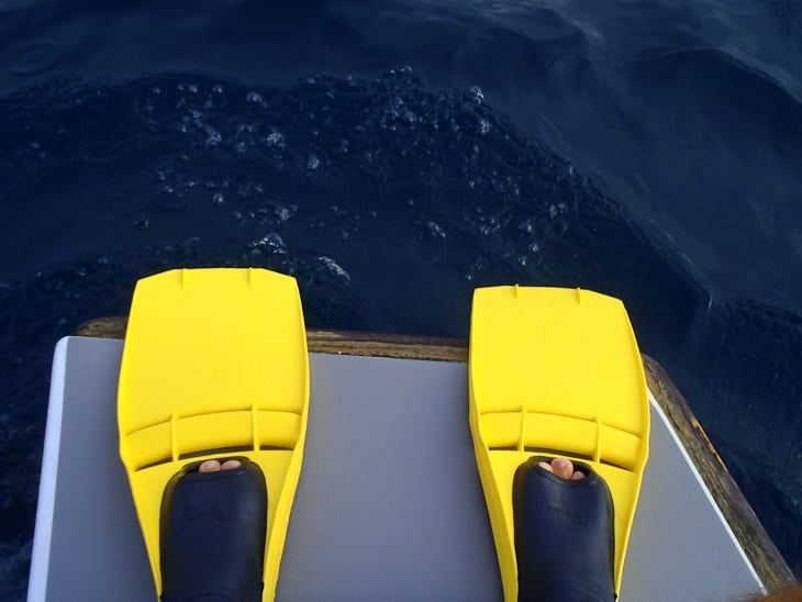 flippers for swimming with dolphins