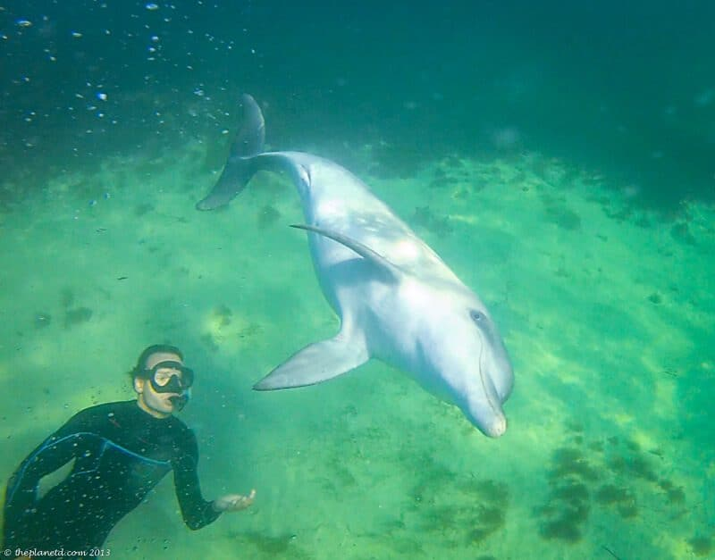 swimming with dolphins in South Australia