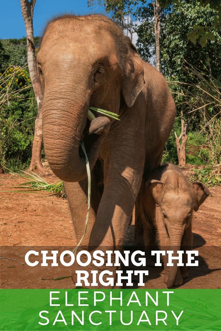 elephant-sanctuary-chiang-mai-thailand