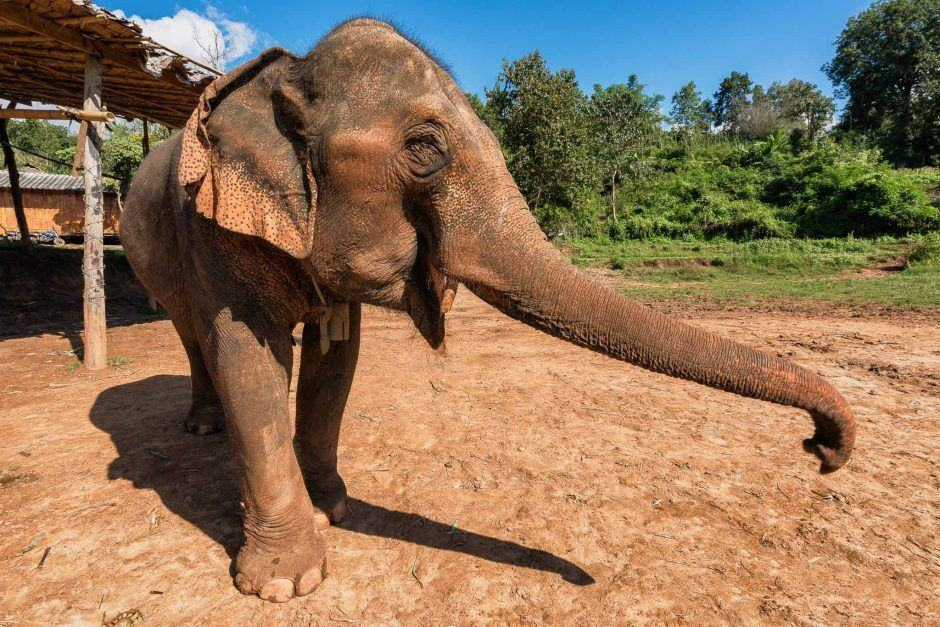 elephant sanctuary chiang mai featured image