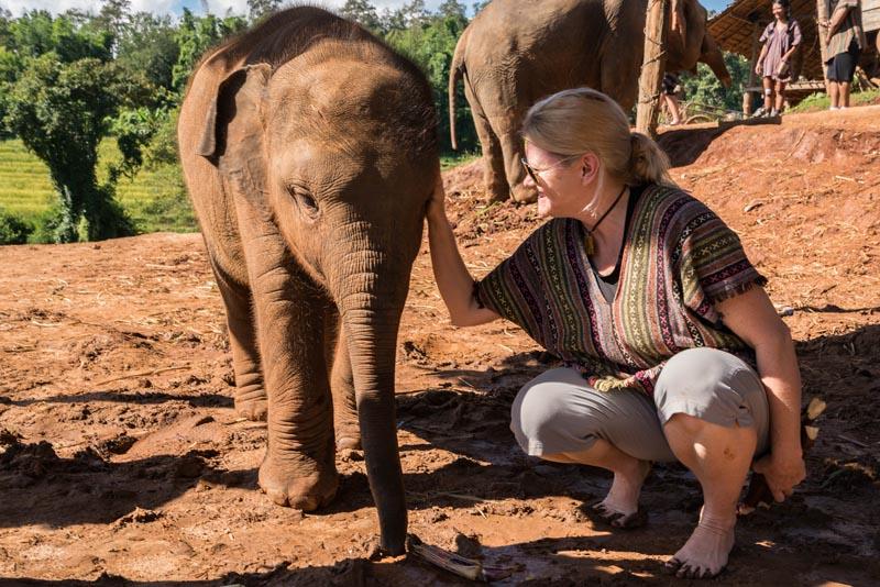 elephant sanctuary chiang mai baby elephant