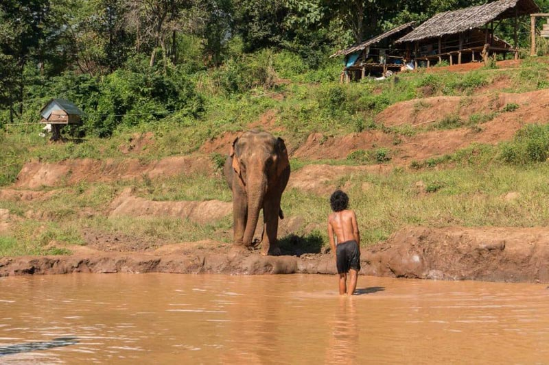 chiang mai elephant with mahout