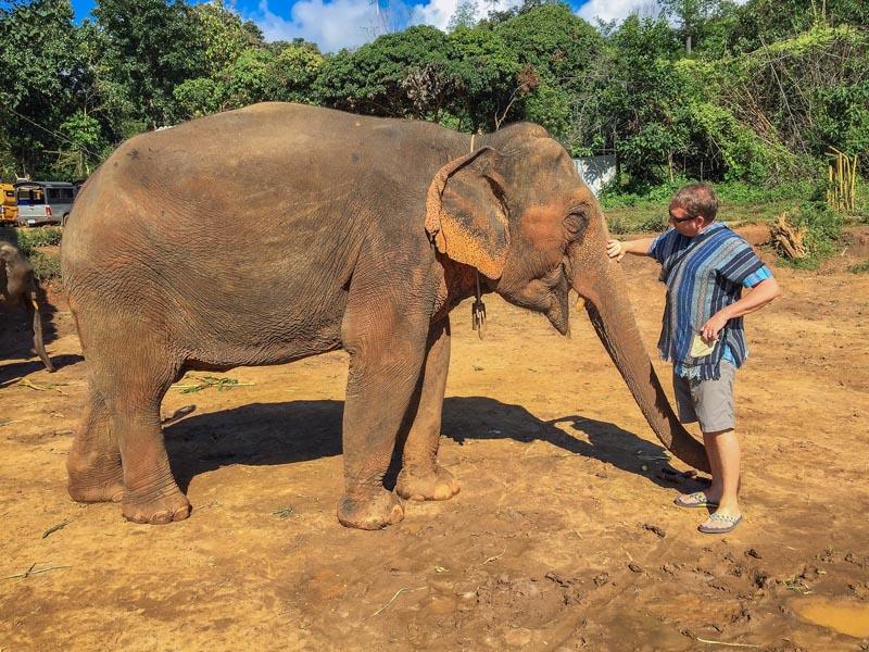elephant sanctuary chiang mai dave adult