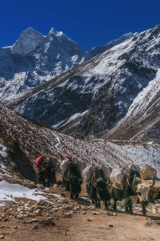 yak rows ebc trek