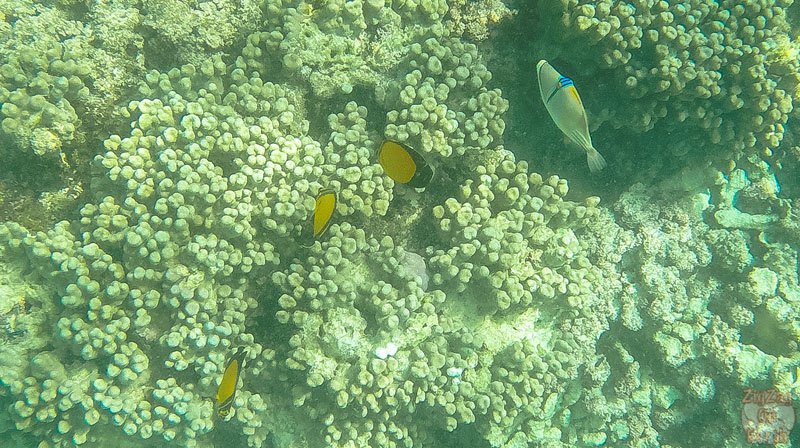 things to do in Oman Scuba diving