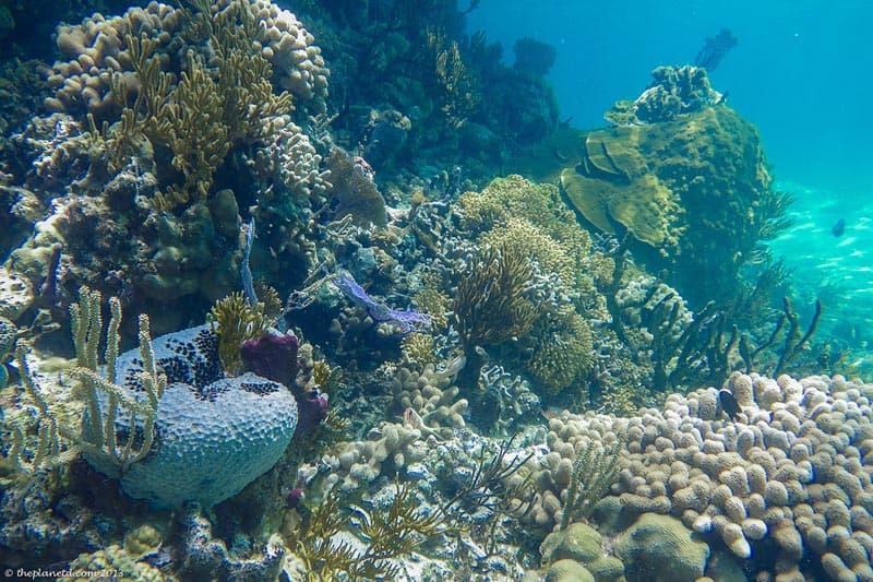 underwater exumas