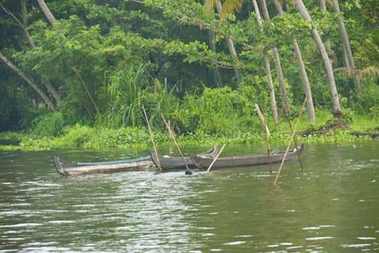 fishing in the kerala backwaters