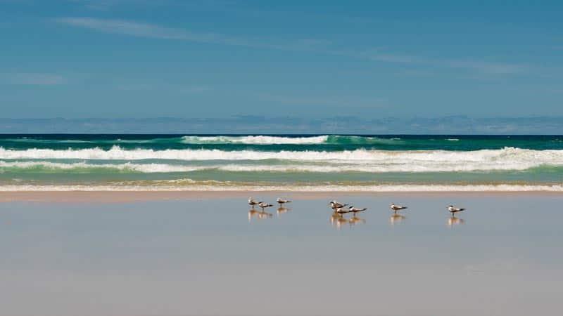 birds of fraser island
