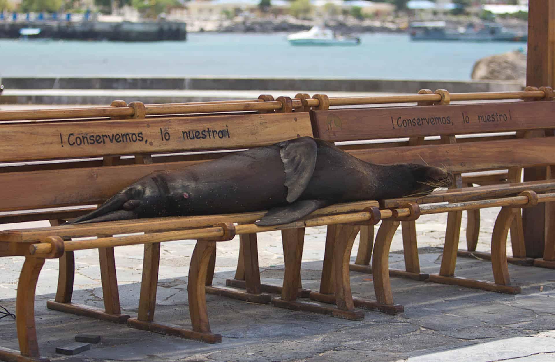 unique wildlife in galapagos islands