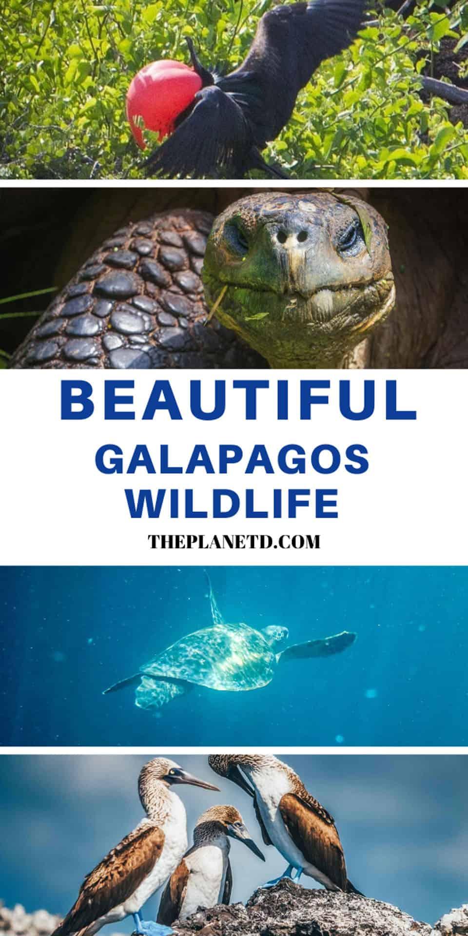 unique galapagos animals