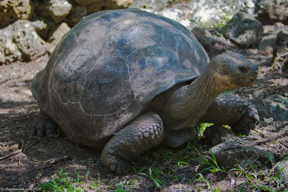 galapagos-islands-giant-tortise-1