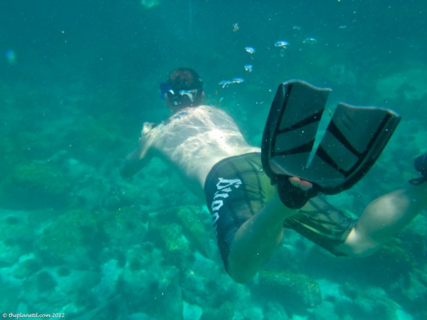 snorkelling the galapagos