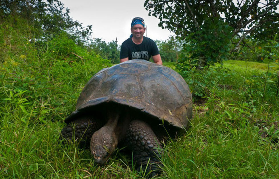 galapagos turtle dave