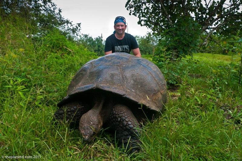 galapagos tortoise dave
