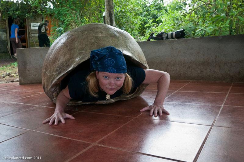 deb tortoise shell