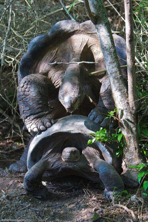 tortoise playing