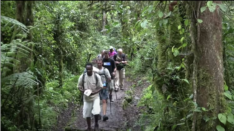 climbing mount kilimanjaro on the trail in the jungle