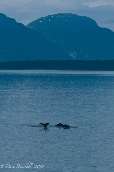 glacier bay cruise whales