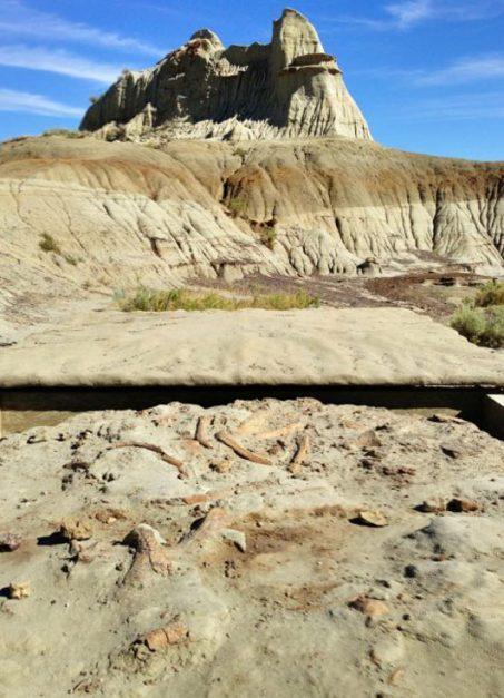 glamping dinosaur provincial park fossil