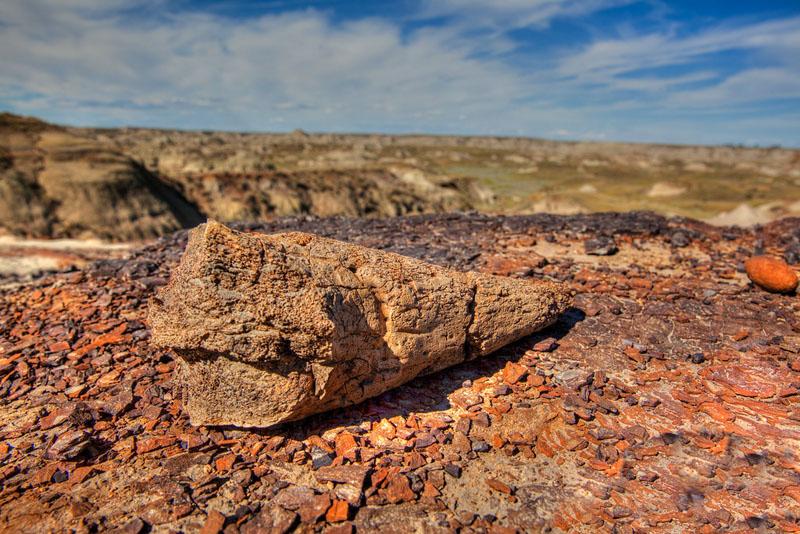 glamping dinosaur provincial park bone