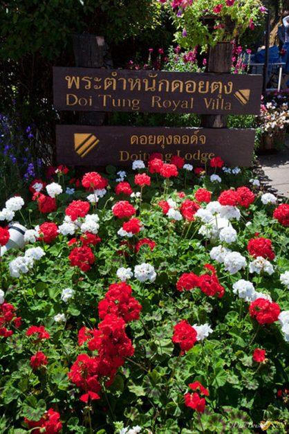 golden triangle thailand flowers