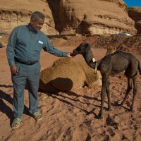 Jordan-guides-middle-east-camels