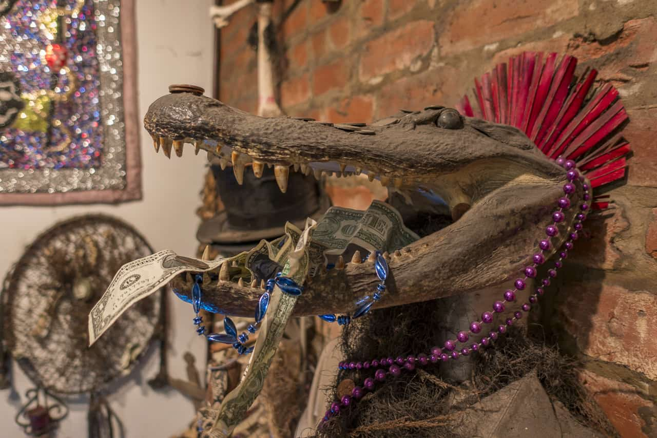 Voodoo museum alligator haunted new orleans