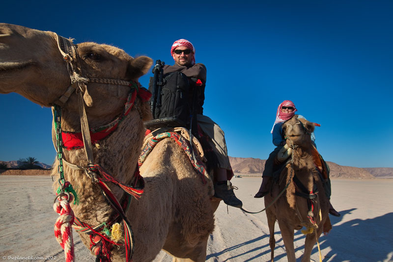 healthy abroad camels