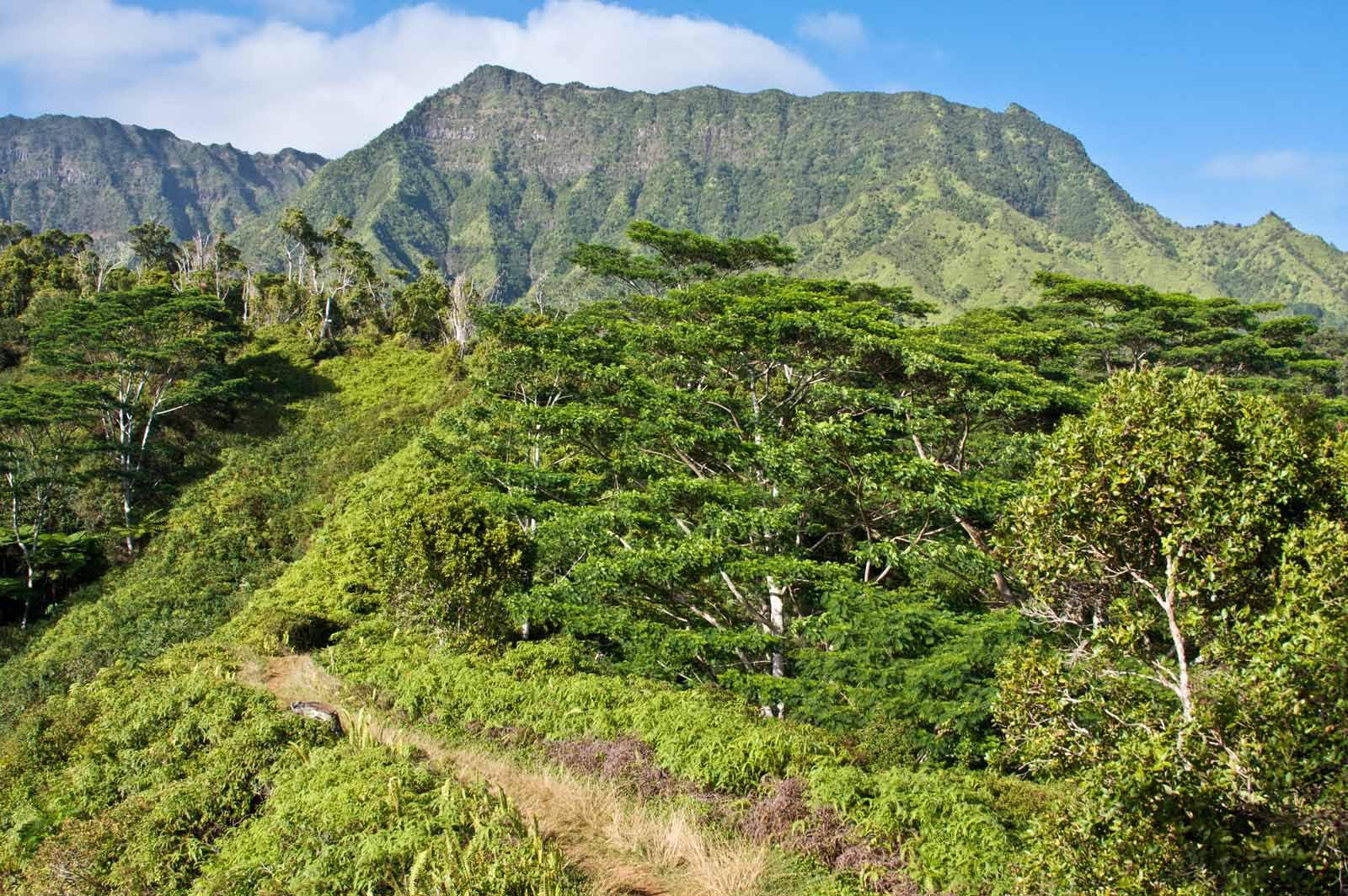 kauai hiking trails kuilau ridge trail