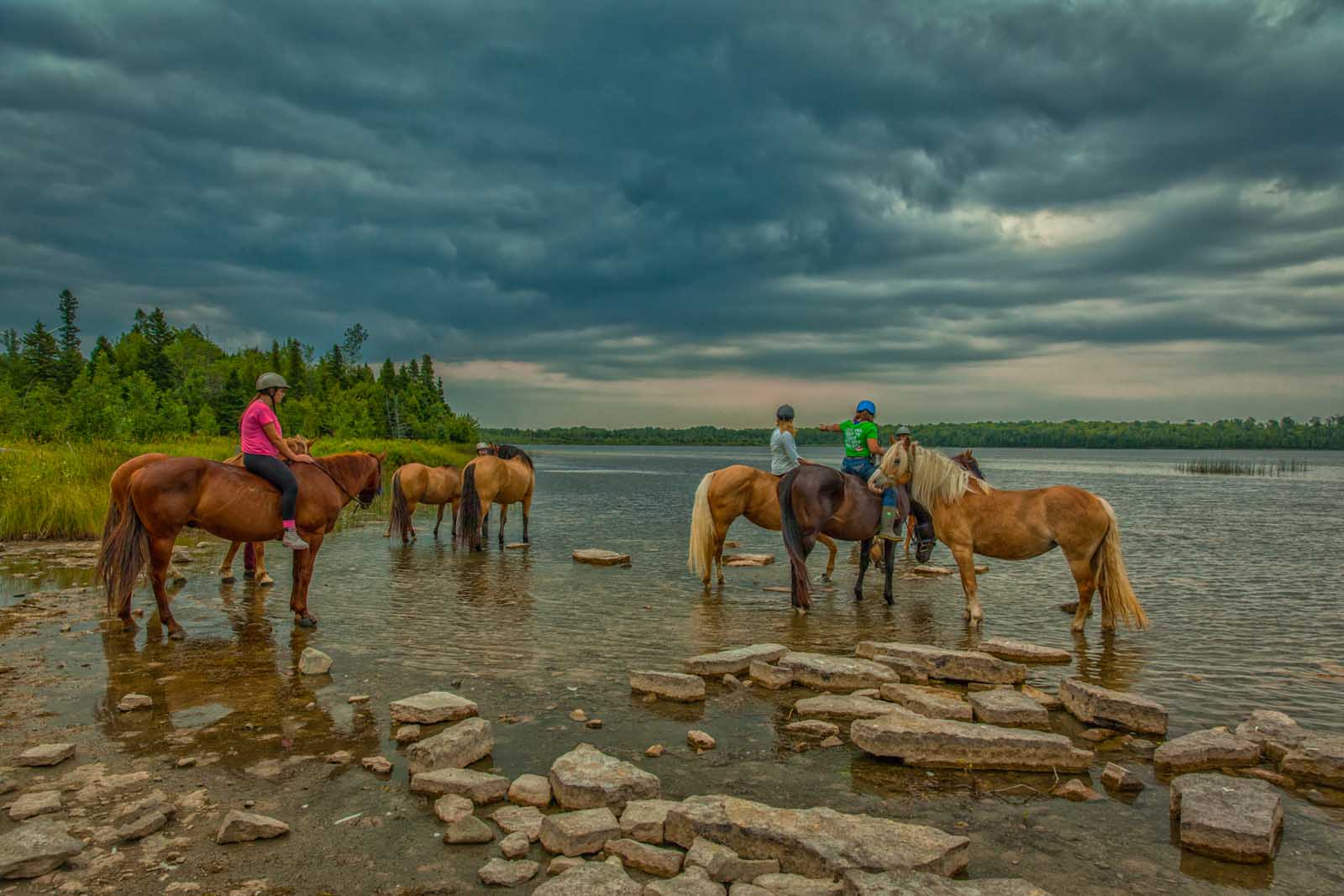 Taking the horses for a drink on Manitoulin Island