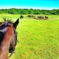 horse-safari-south-africa
