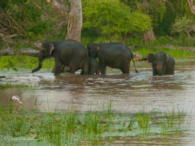 The Human Elephant Conflict in Asia
