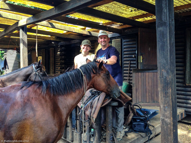 isimangaliso dave horse