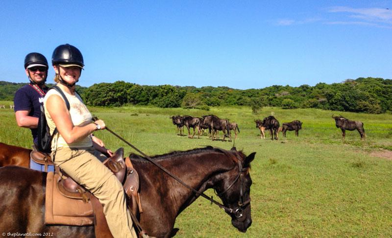 isimangaliso deb horse
