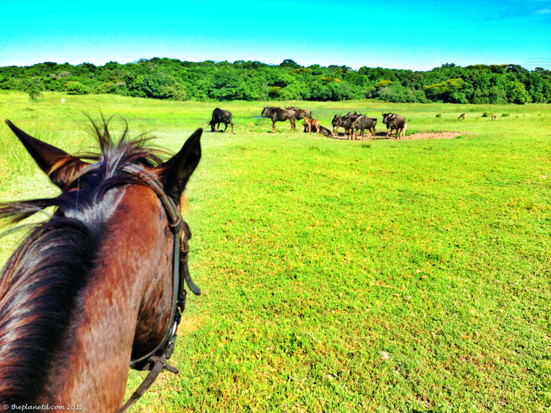 A World Heritage Site Horse Safari