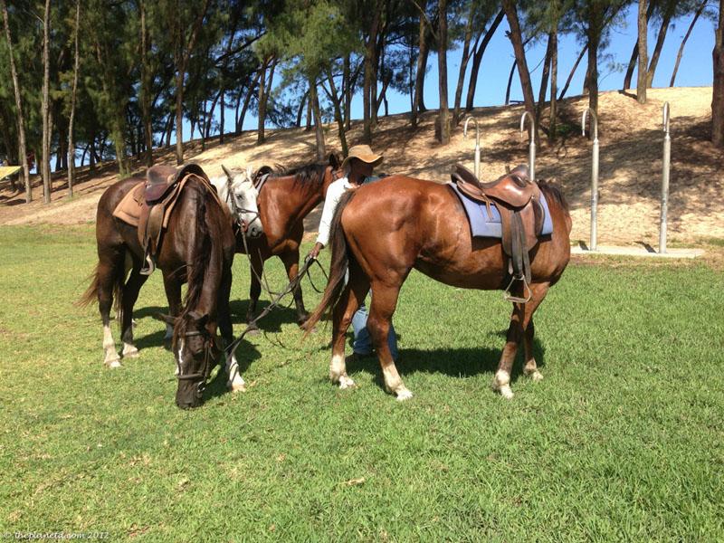 isimangaliso horses