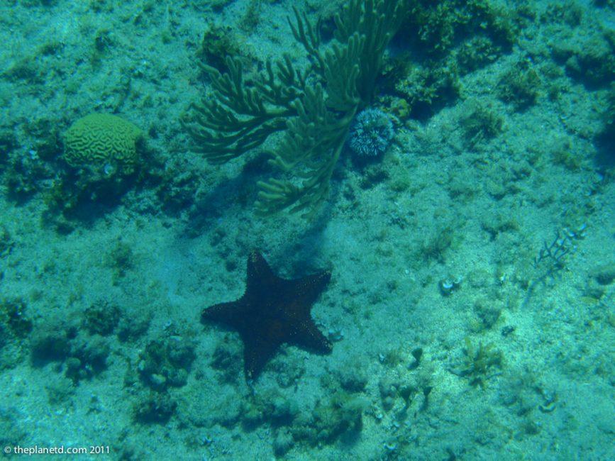 starfish-brain-coral-jamaica