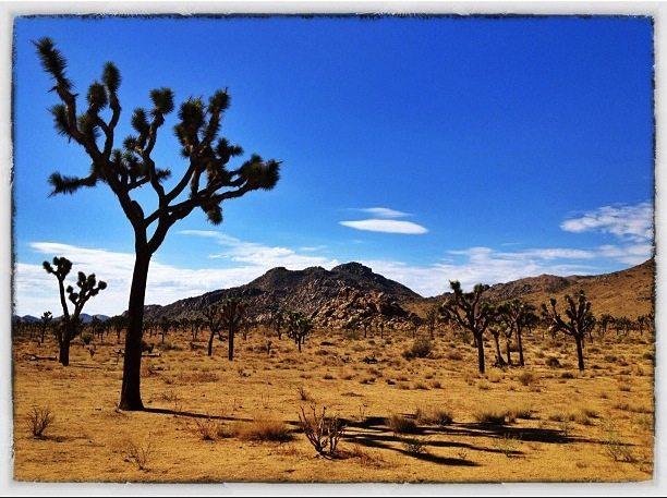 iphone photo of joshua tree national park