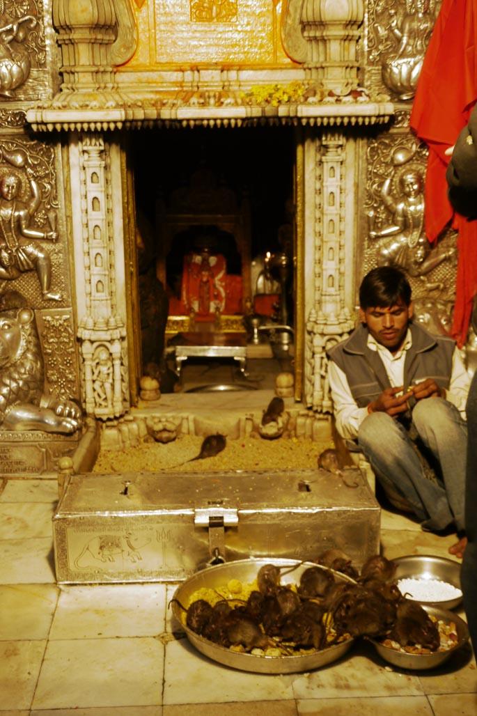 karni mata rat temple altar