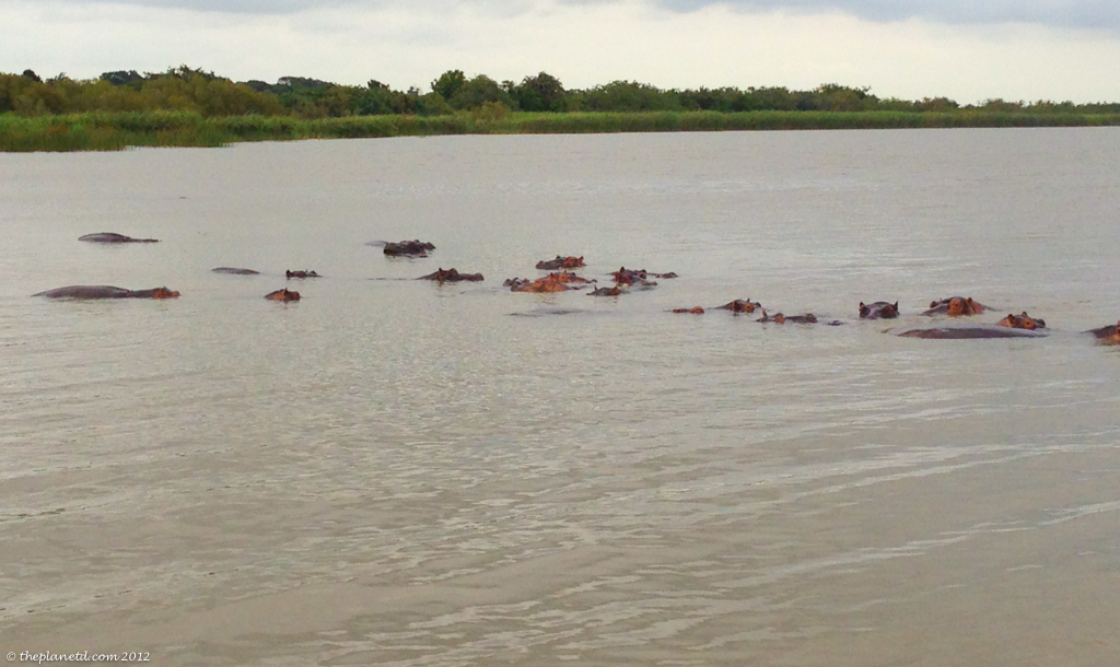 kayaking with crocodiles and hippos