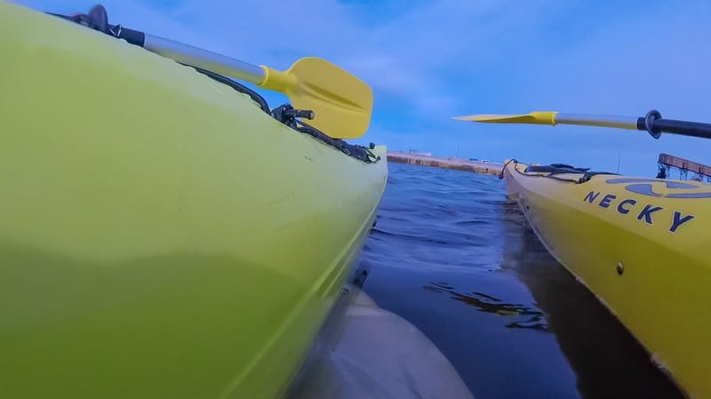 kayaking with Beluga Whales - whale swimming between our kayaks
