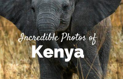 incredible kenya photos baby elephant playing