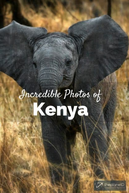 incredible kenya photos baby elephant playing