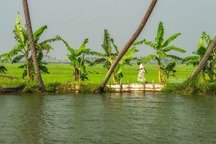 kerala backwaters life on the shore