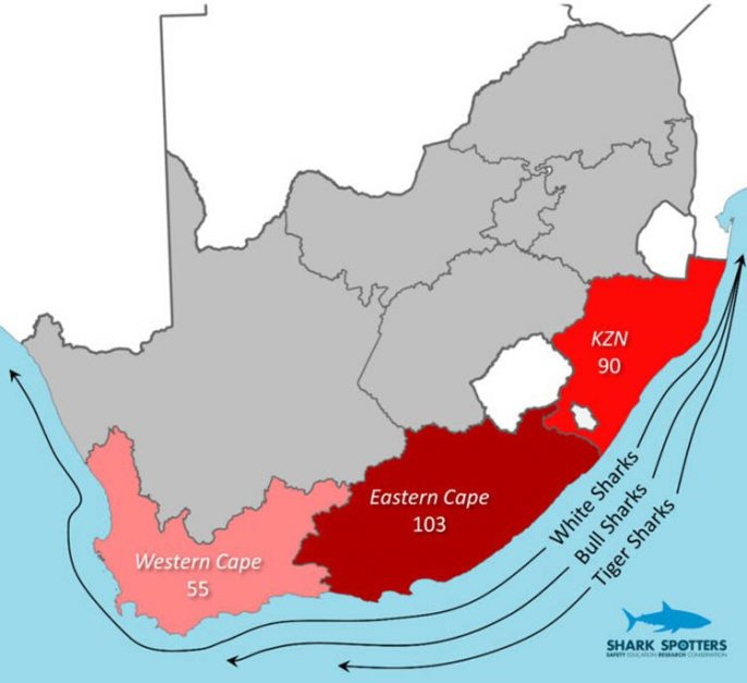 sharks info graphic cape town